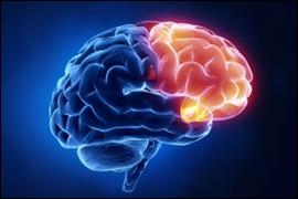 pre-frontal-cortex